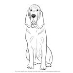 How to Draw a Bloodhound Dog
