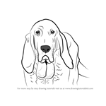 How to Draw Bloodhound Face