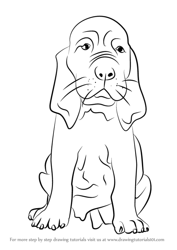 Learn How to Draw a Bloodhound Puppy Dogs Step by Step Drawing