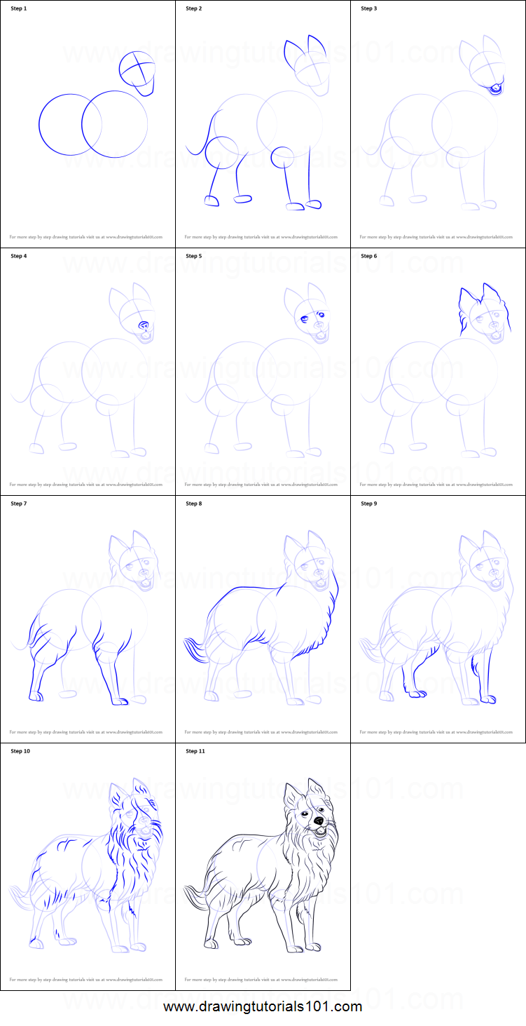 how to draw border collie printable step by step drawing sheet drawingtutorials101com