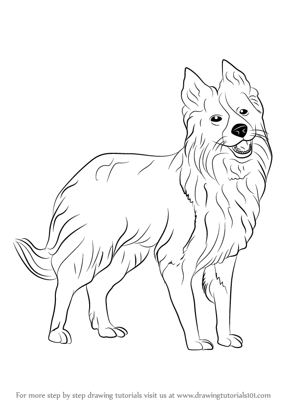 learn how to draw border collie dogs step by step drawing tutorials