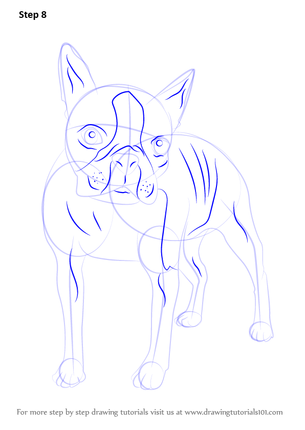 how to draw a boston terrier learn how to draw a boston terrier dogs step by step 7507