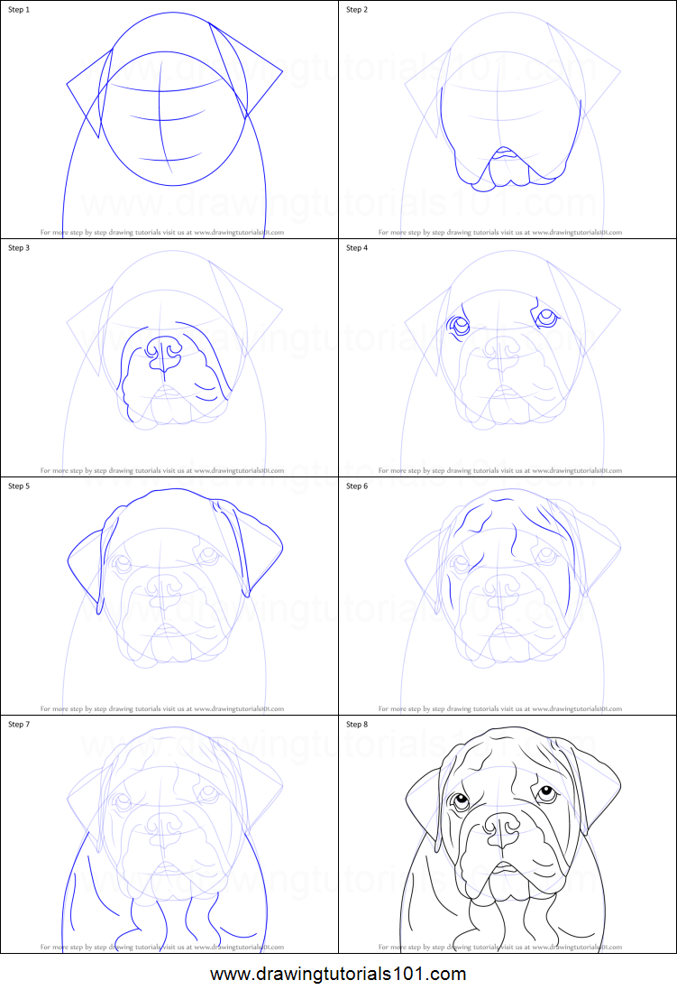 How To Draw A Bulldog Face Printable Step By Step Drawing Sheet Drawingtutorials101 Com