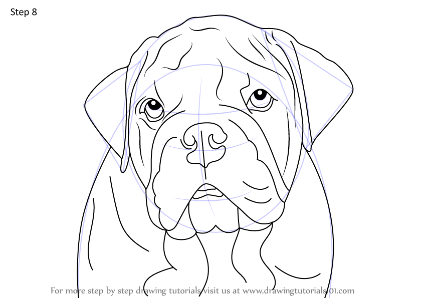 Learn How To Draw A Bulldog Face Dogs Step By Step Drawing Tutorials