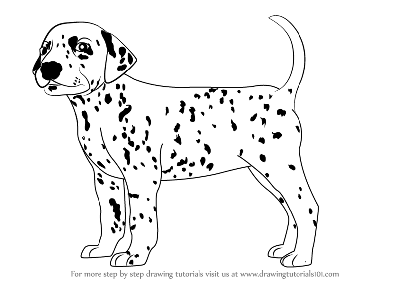 Learn how to draw a dalmatian dog dogs step by step drawing tutorials