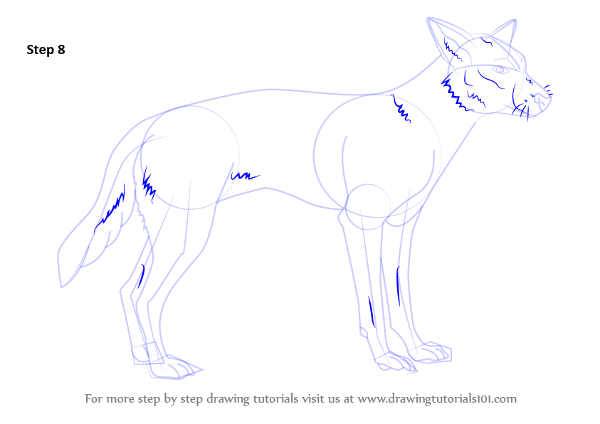 Learn How To Draw A Dingo Dogs Step By Step Drawing