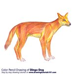How to Draw a Dingo