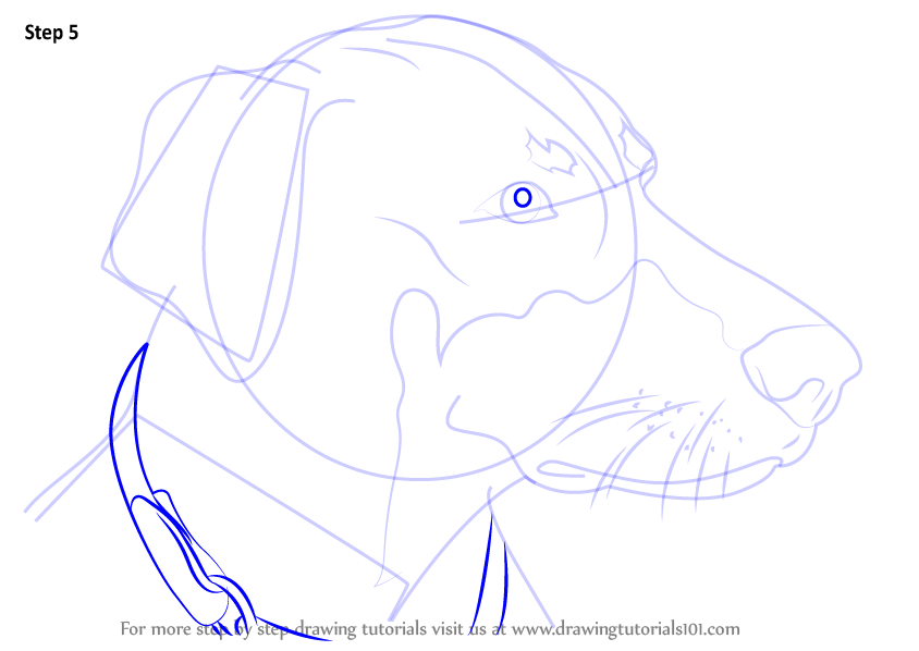 Learn How To Draw Doberman Face Dogs Step By Step