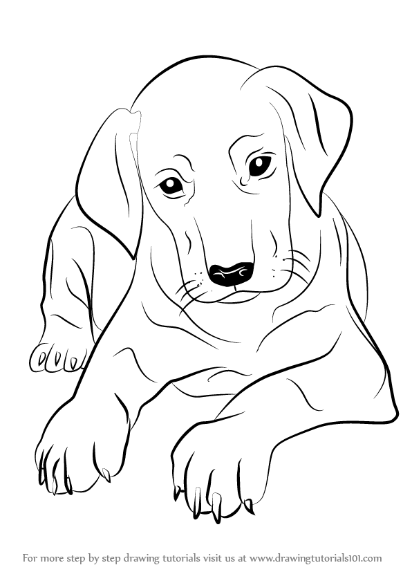 Learn How to Draw Doberman Puppy Dogs Step by Step Drawing