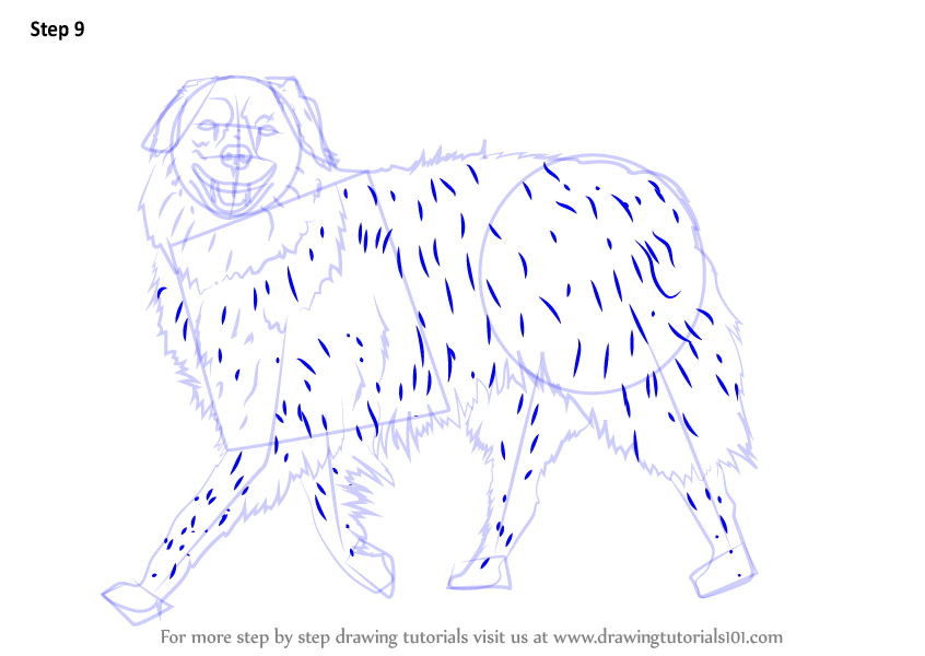 Learn How To Draw A Dog Walking Dogs Step By Step