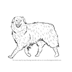 How to Draw a Dog Walking