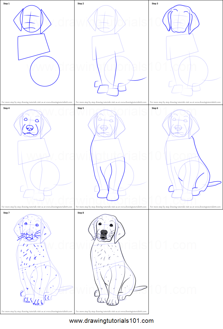 how to draw golden retriever puppy printable step by step drawing