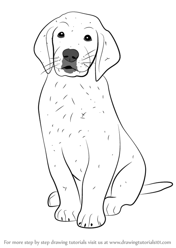 learn how to draw golden retriever puppy dogs step by step