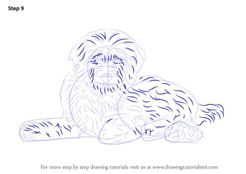 how to draw a goldendoodle step by step