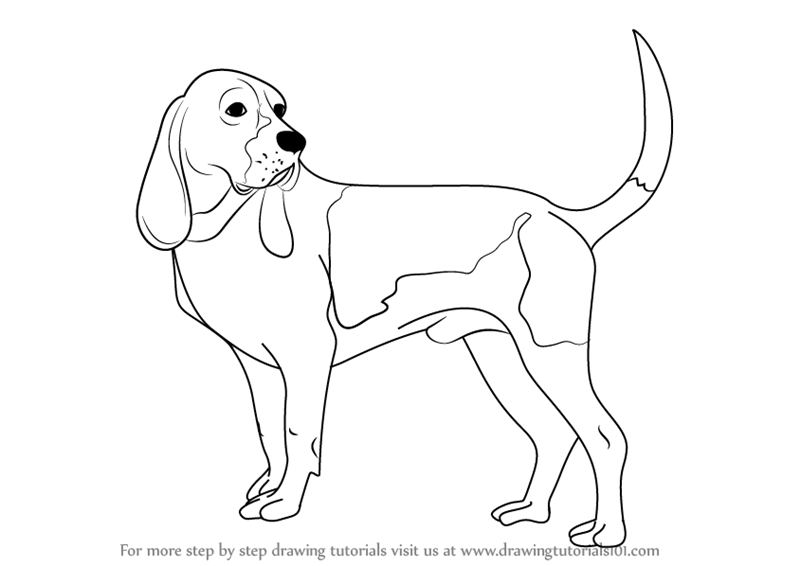 learn how to draw a hound dog dogs step by step drawing tutorials