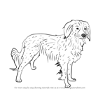 How to Draw a Kooikerhondje