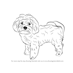 how to draw a dog moltese