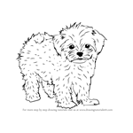 How to Draw a Maltese