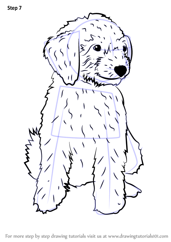 Learn How to Draw a Mini Goldendoodle