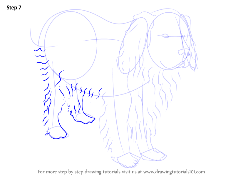 Learn How To Draw A Newfoundland Dog Dogs Step By Step