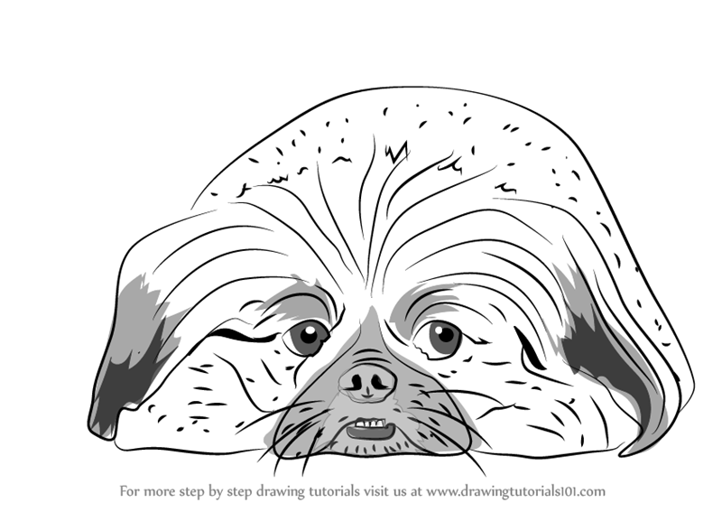 learn how to draw pekingese dog  dogs  step by step