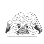 How to Draw Pekingese dog
