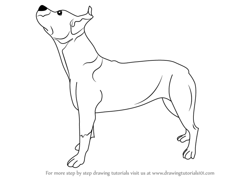 Learn How To Draw A Pit Bull Dog Dogs Step By Step Drawing Tutorials