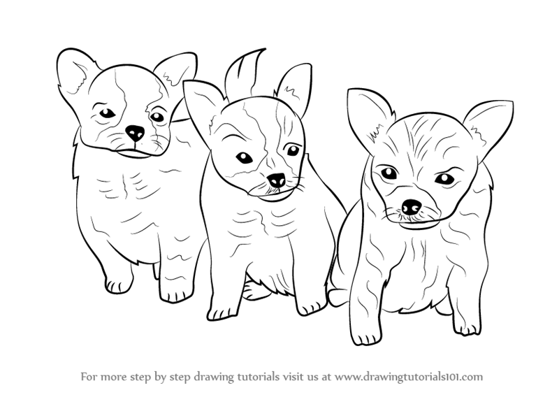 learn how to draw puppies dogs step by step drawing tutorials