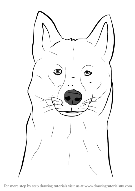 Learn How To Draw A Siberian Husky Dog Head Dogs Step By Step