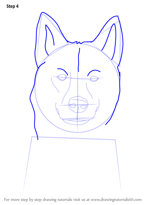 Learn How to Draw a Siberian Husky Dog Head (Dogs) Step by