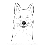 How to Draw a Siberian Husky Dog Head