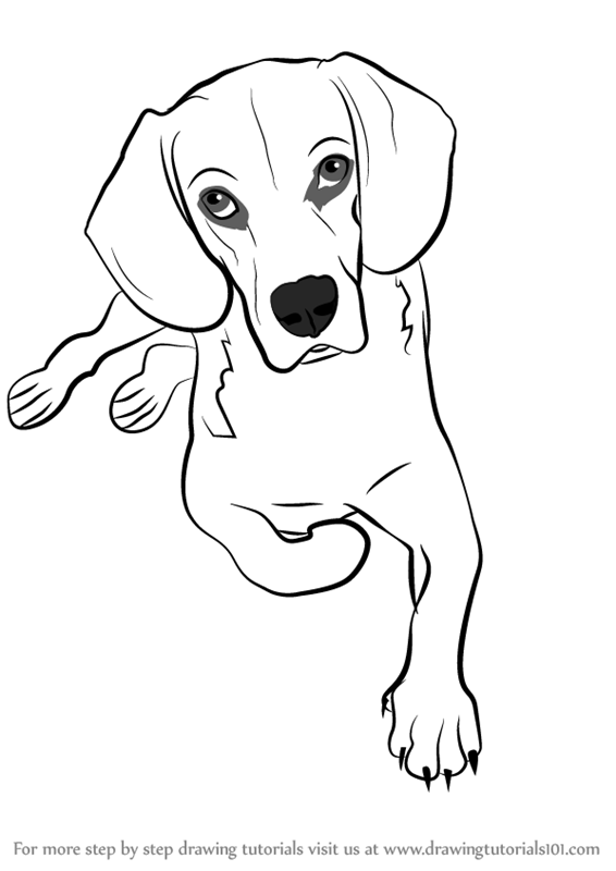 Step by Step How to Draw a Sitting Dog ...