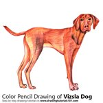 How to Draw a Vizsla Dog