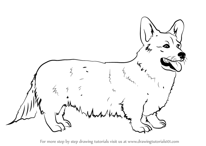 Learn How To Draw A Welsh Corgi Dogs Step By Step