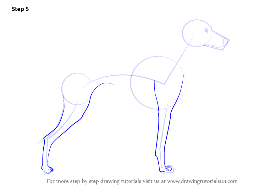 Learn How To Draw A Whippet Dogs Step By Step Drawing