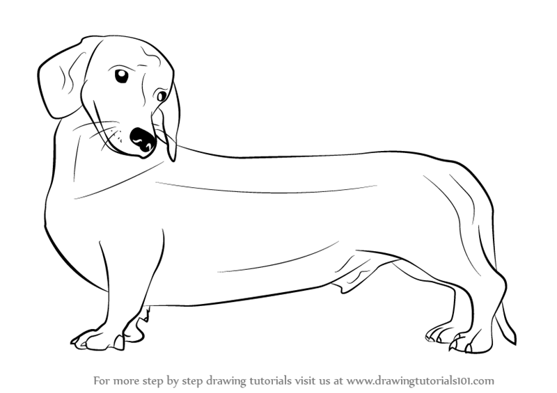Learn how to draw a wiener dog dogs step by step drawing tutorials