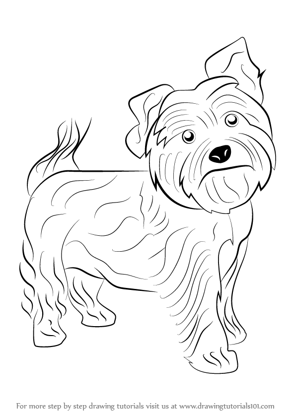Learn How to Draw a Yorkie Dog (Dogs) Step by Step
