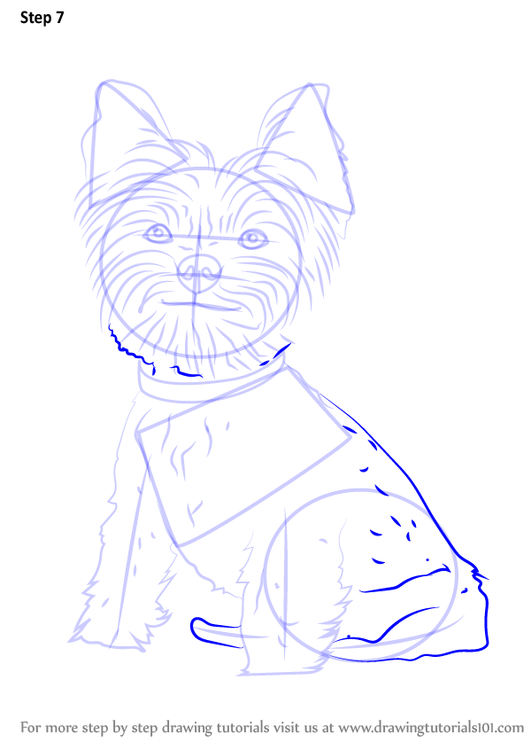 Learn How To Draw Yorkie Puppy Dogs Step By Step Drawing Tutorials