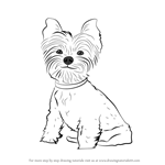 How to Draw Yorkie Puppy