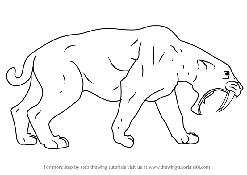 Learn How To Draw A Saber Toothed Cat Extinct Animals