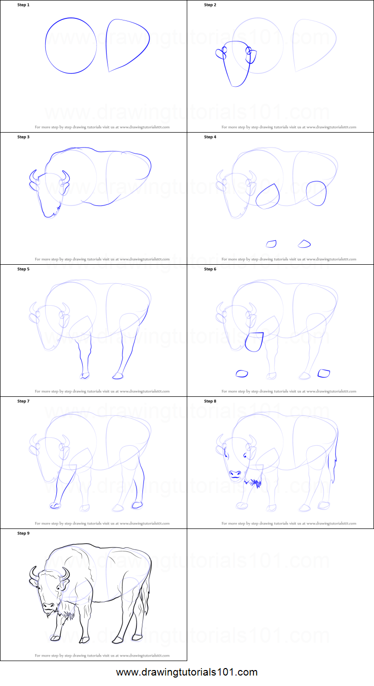 how to draw animals step by step videos