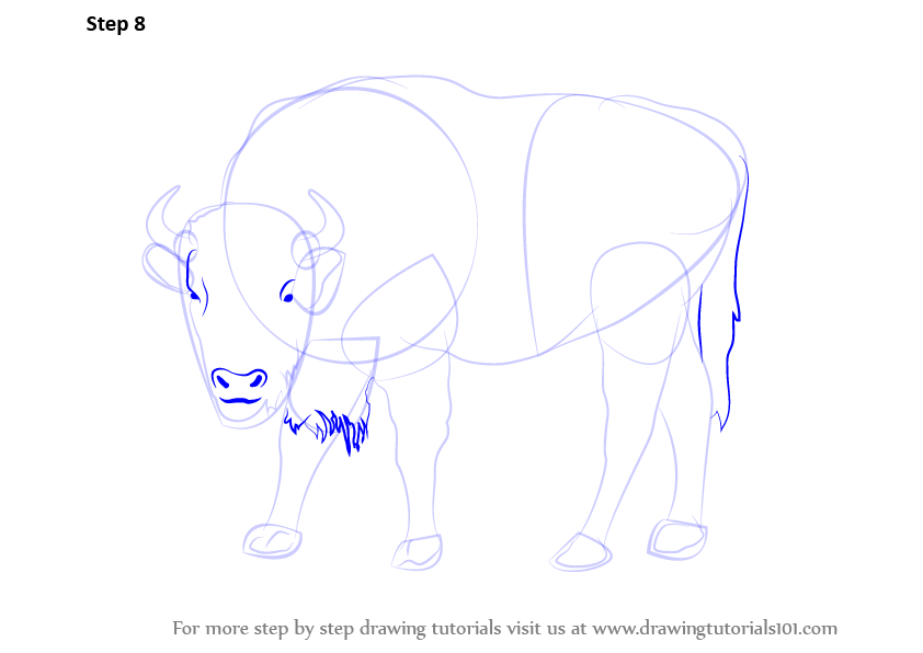 how to draw a buffalo step by step