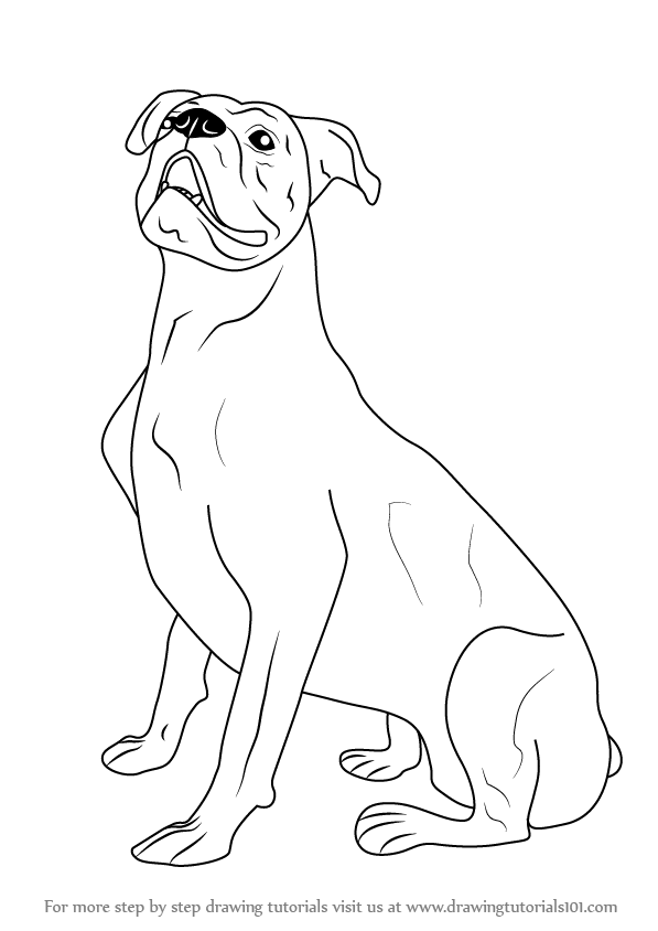 Simple Line Drawings Of Farm Animals : Boxer dog drawing simple