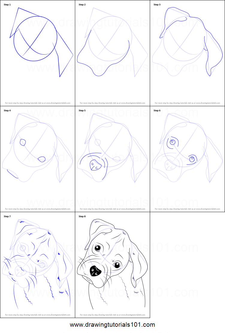 How To Draw Boxer Puppy Face Printable Step By Step Drawing Sheet