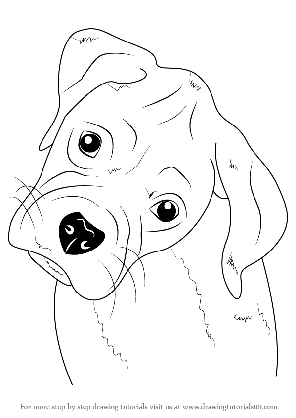 Learn How to Draw Boxer Puppy Face Farm Animals Step by Step