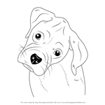 Learn How To Draw Boxer Puppy Face Farm Animals Step By
