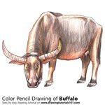 How to Draw a Buffalo