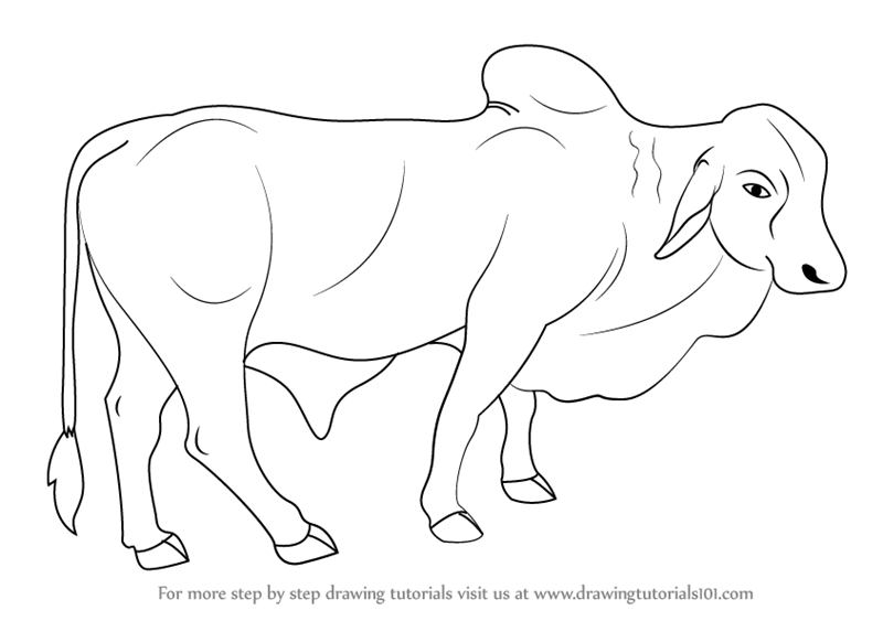 learn how to draw a bull farm animals step by step drawing tutorials