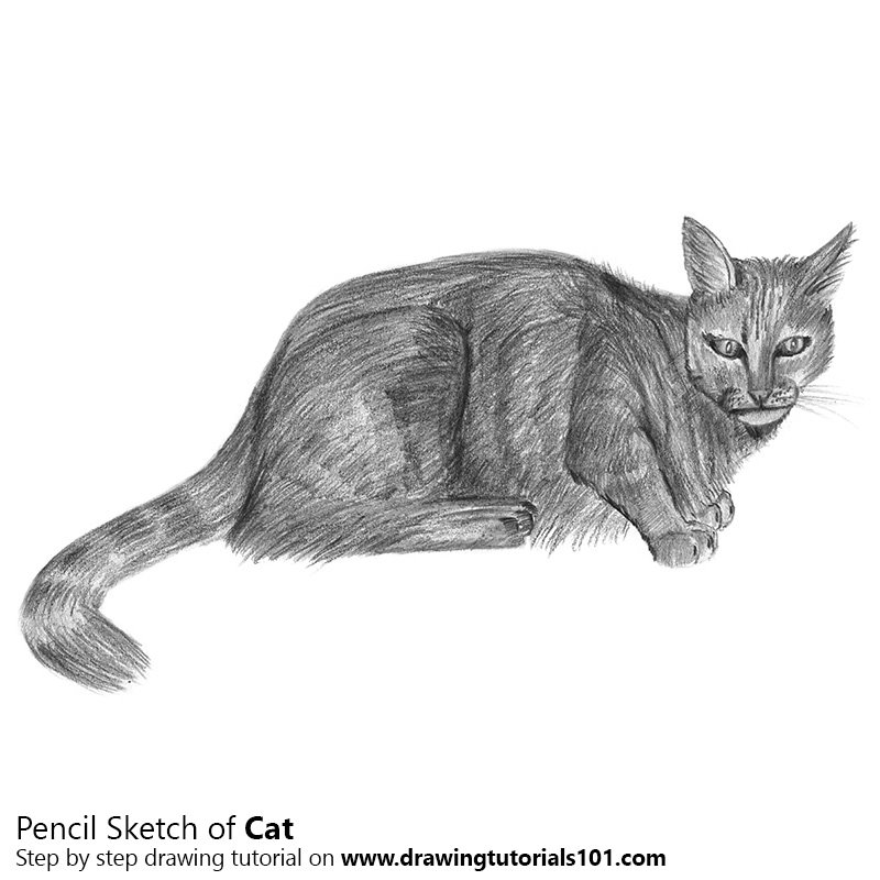 Cat pencil drawing how to sketch cat using pencils drawingtutorials101 com