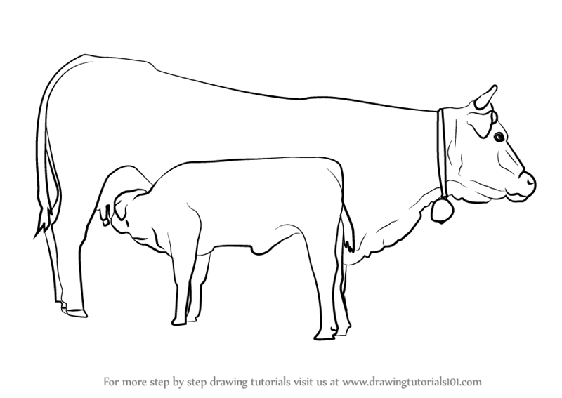 How To Draw Cow And Young Calf